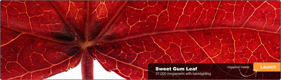gigamacro_home_slide_sweetgum_1140