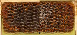 Comparison of bee brood frames